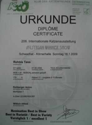 OevekSchwechat2009e7