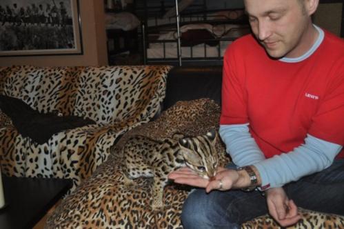 asianleopardcat004