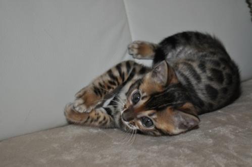 ehemaligekatzen014