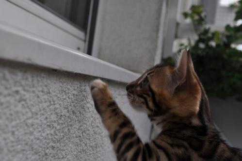 ehemaligekatzen016