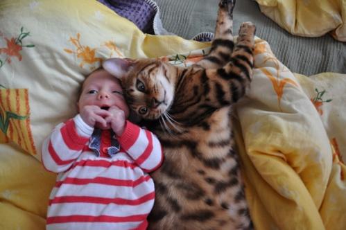 kidscats2
