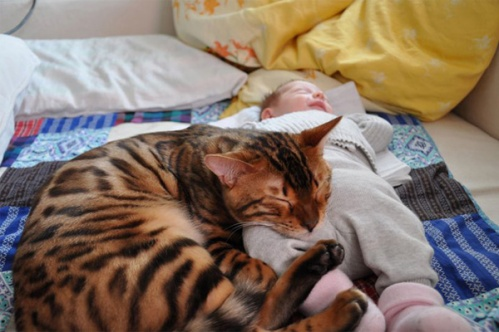 kidscats3