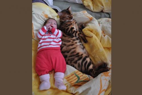 kidscats4