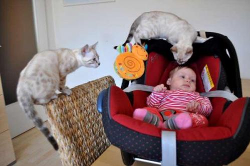 kidscats6