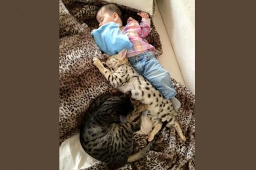 kidscats7