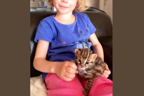 kidscats8