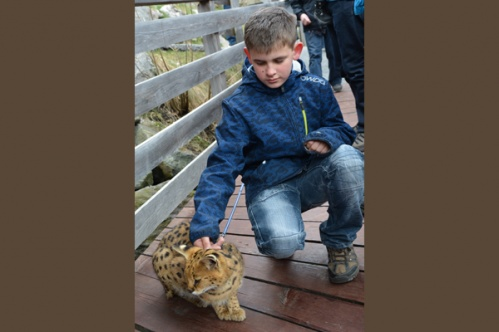kidscats9a
