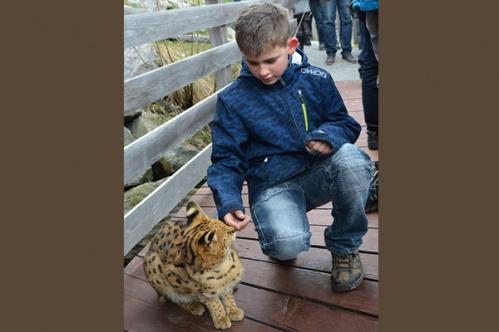 kidscats9b