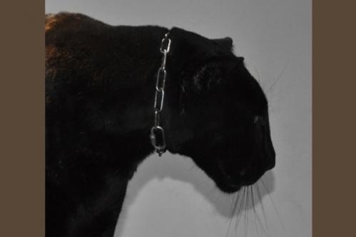 panther021