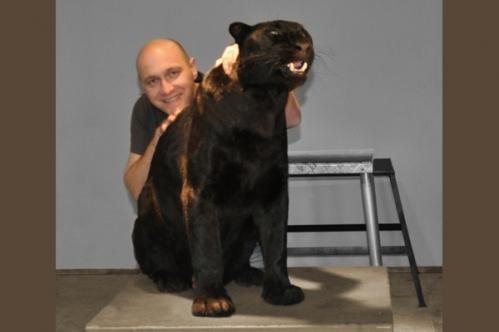 panther029