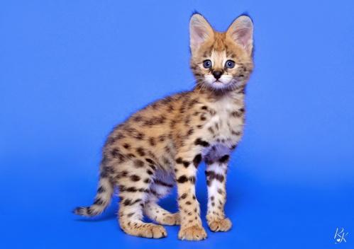 serval3mb