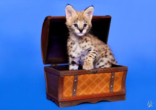 serval3me