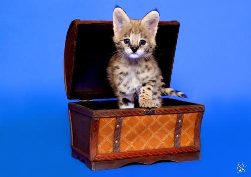 serval3mf