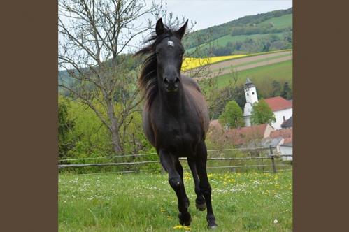 pferdb007